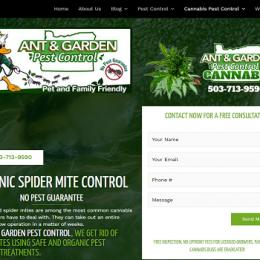 Treating spider mites in marijuana